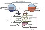 Абхм на газе – Абсорбционные бромистолитиевые тепловые насосы – Абсорбционные холодильные машины (АБХМ).